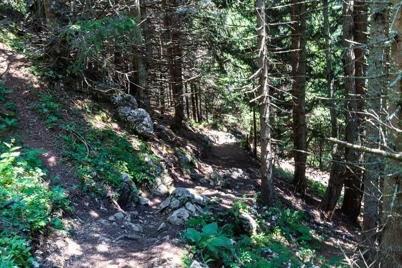 Hochobir Wanderweg Waldstück
